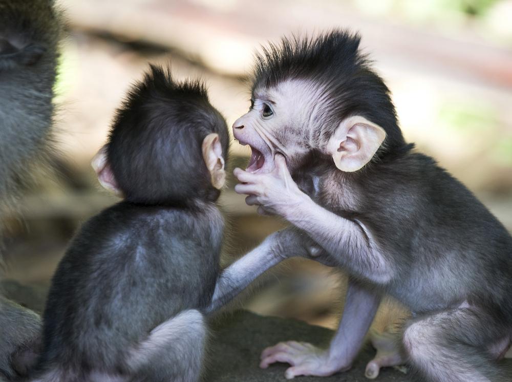 Pszichológus blog: Csányi Vilmos: Az emberi viselkedés - recenzió