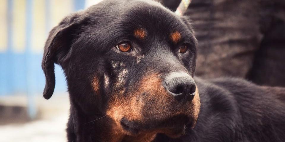 pszichológus szemmel az állatkínzás lelki hátteréről